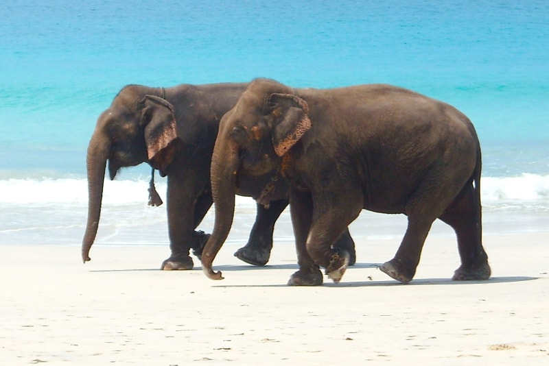 Andaman & Nicobar islands - paradise islands you should visit