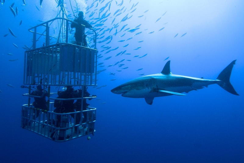 cage diving - water sports
