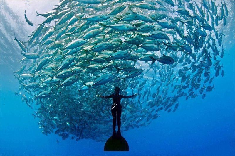 freediving - water sports