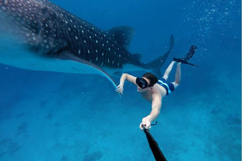 snorkle with whales - water sports