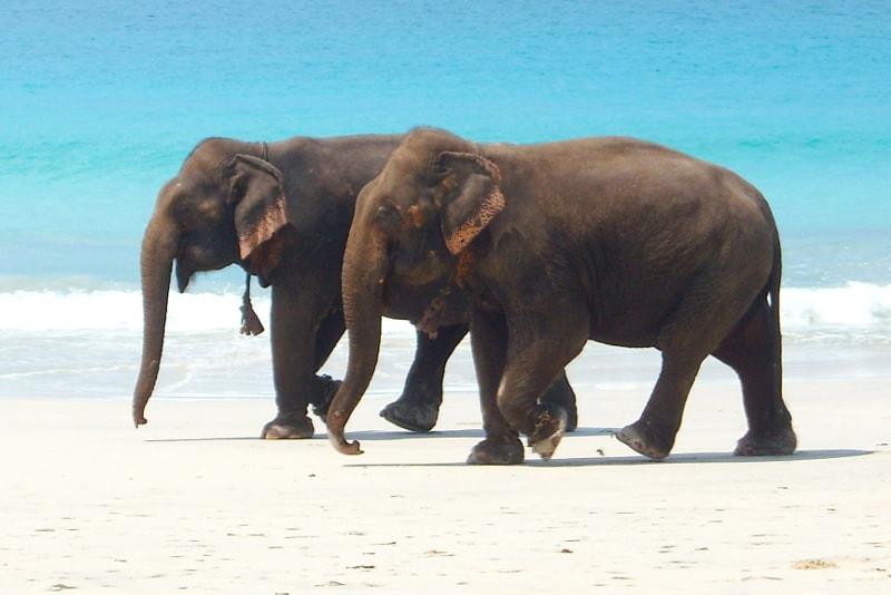 Îles Andaman & Nicobar - Îles paradisiaques