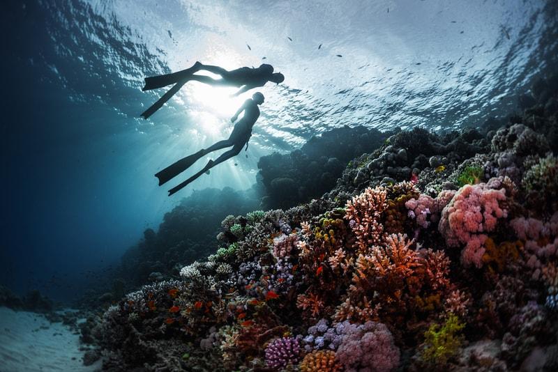 plongée en apnée - Sports Nautiques