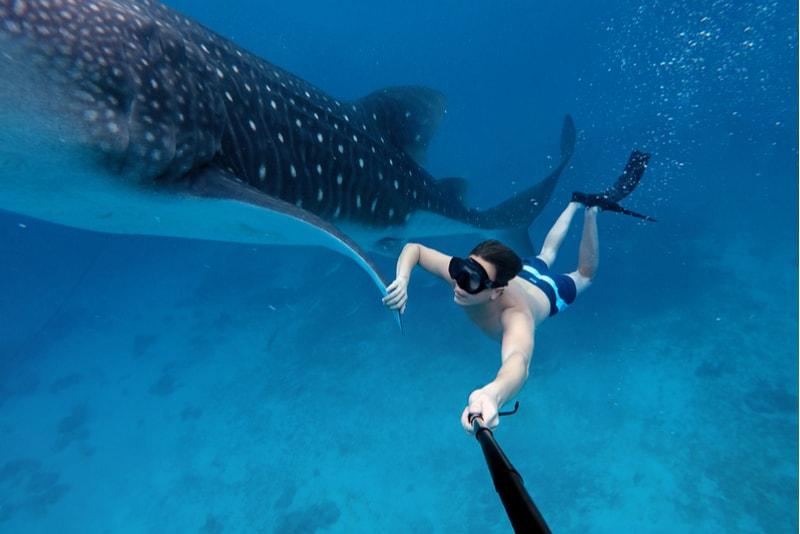 snorkle avec baleine -  Sports Nautiques