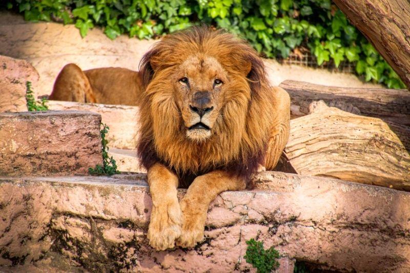 Zoo von Barcelona