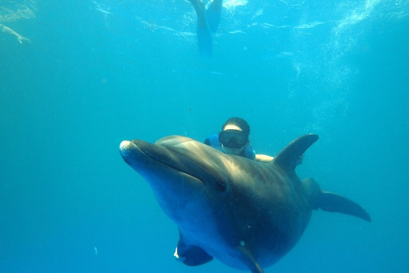 Swim with dolphins - Fun things to do in Australia