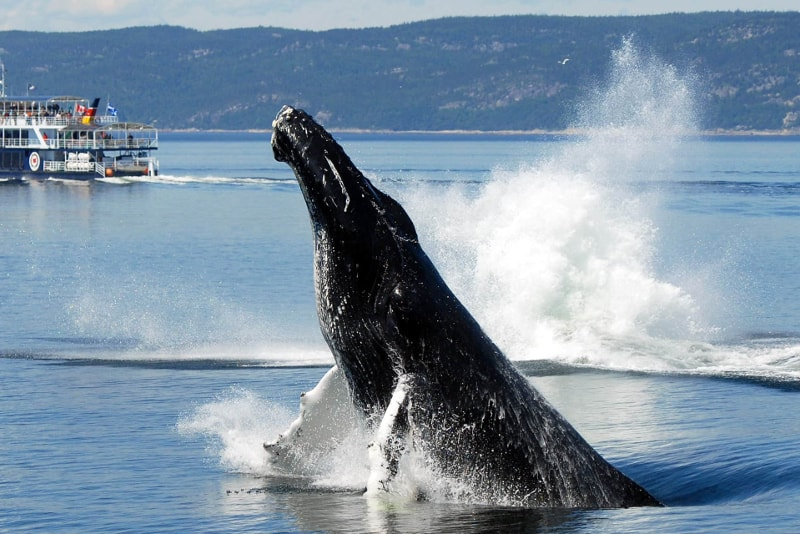 Whale Watching at St. Lawrence Marine Park in Canada - Bucket List ideas