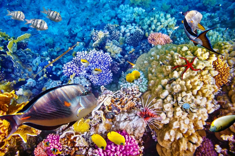 The Great Barrier Reef thrills tourists from all over the world! - Fun things to do in Australia