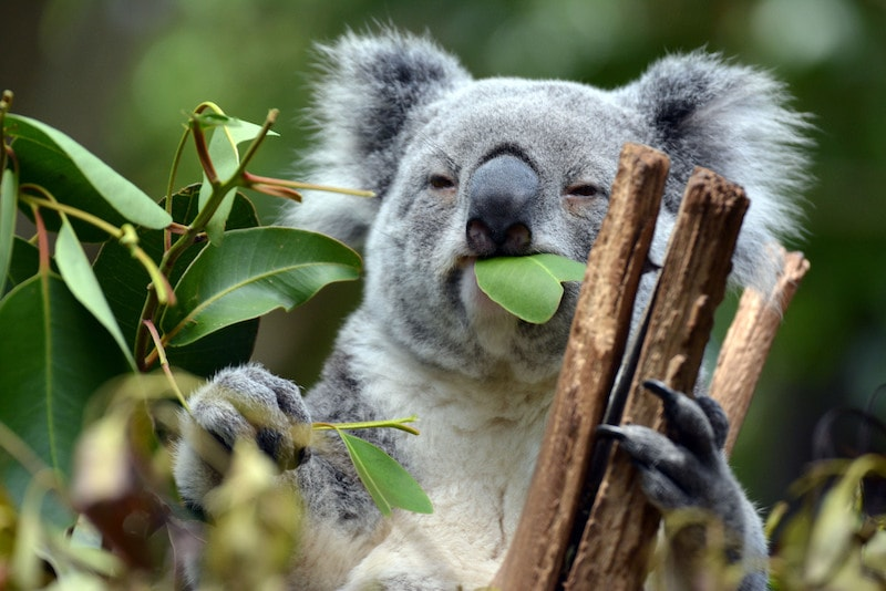 Lone Pine - Cose da Fare, Vedere e Mangiare in Australia