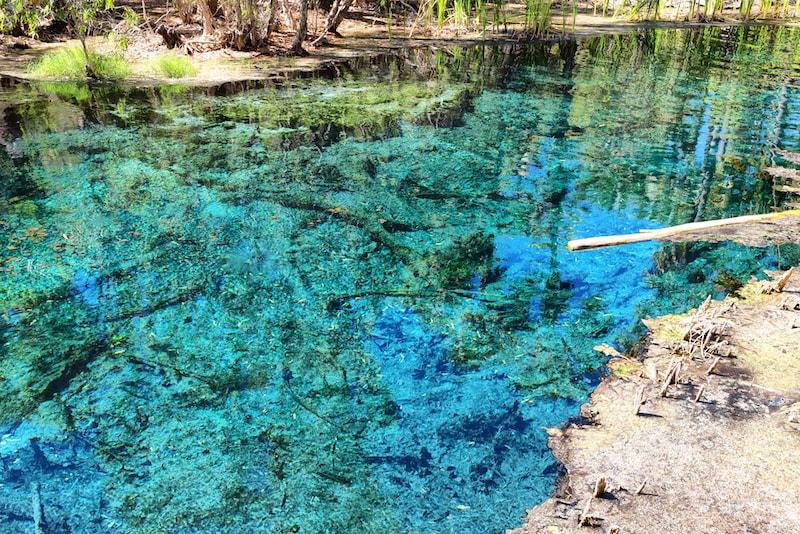 Mataranka Spring - Cose da Fare, Vedere e Mangiare in Australia