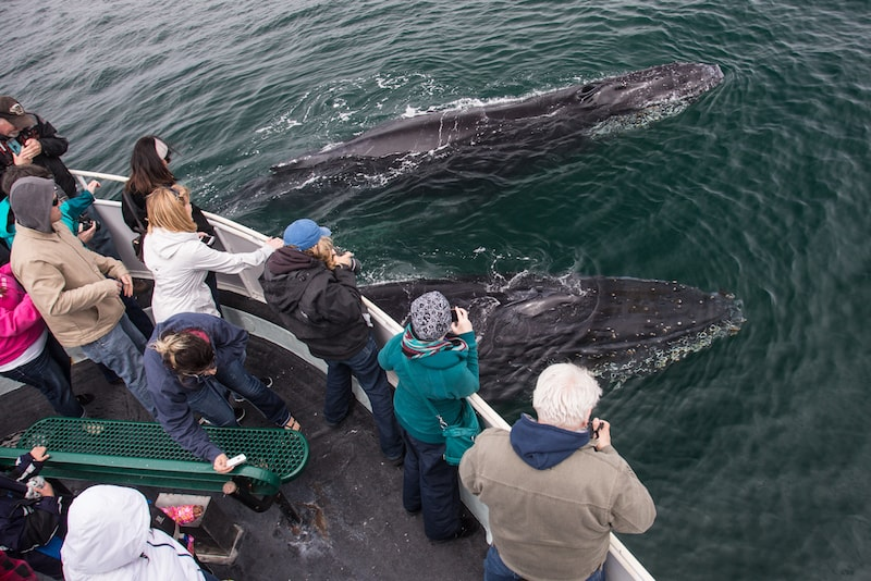 Whale watching - Fun things to do in Australia