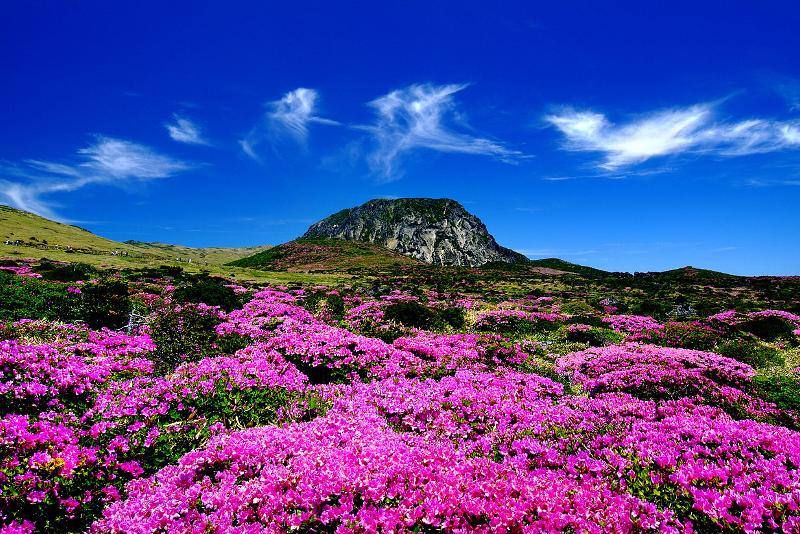 L'ile de Jeju - Où Partir en Vacances - Voyages de Rêve