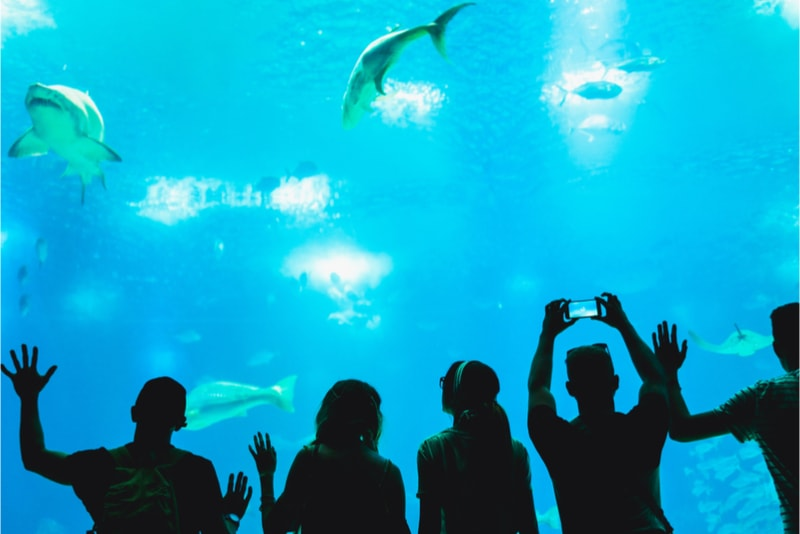 Lisbon Oceanarium - Things to do in Lisbon - Must see, must do, must eat