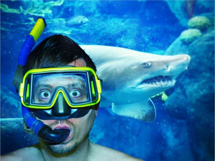 Requin au Barcelona Aquarium - Choses à Faire à Barcelone