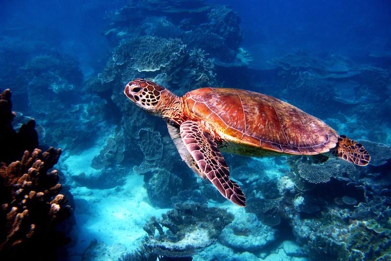 La Grande Barrière de Corail - Que faire en Australie