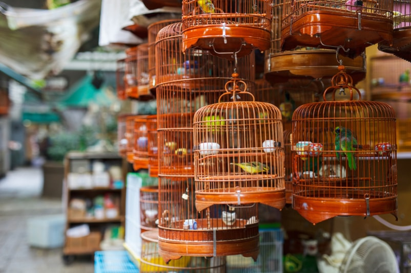 Bird market - things to do in Hong Kong