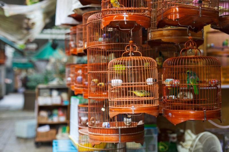 Mercado de pássaros - Coisas para fazer em Hong Kong