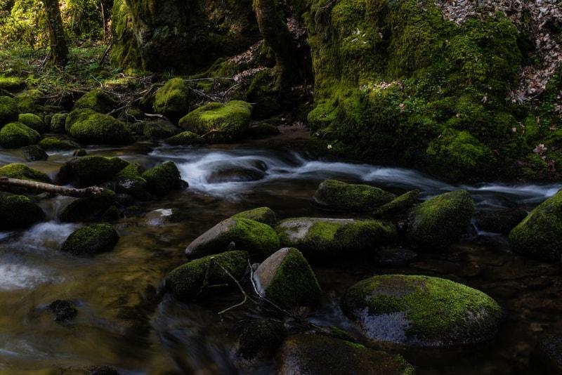 Black Forest - Bucket List ideas