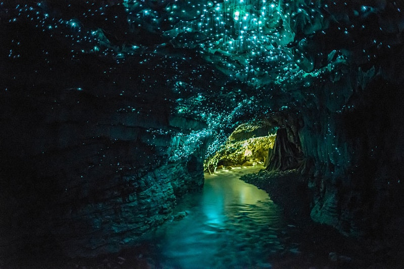 Glowworm Cave in New Zealand - Bucket List ideas