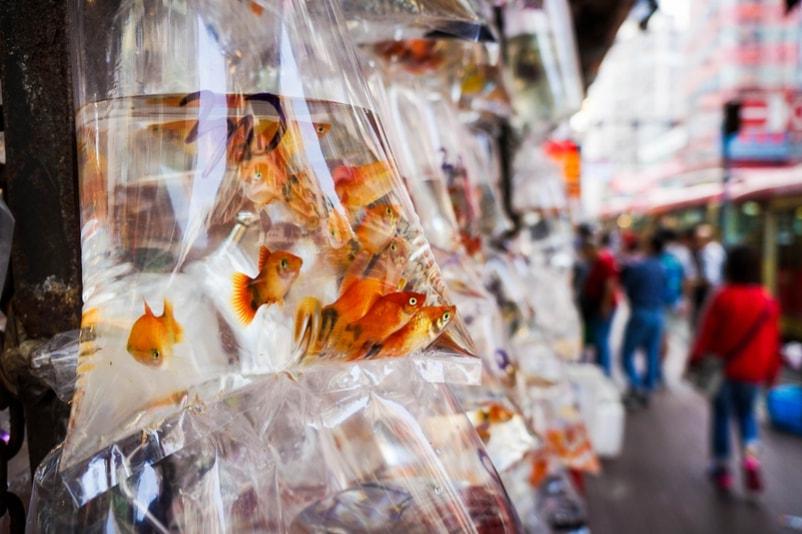 Mercado do peixinho dourado - Coisas para fazer em Hong Kong