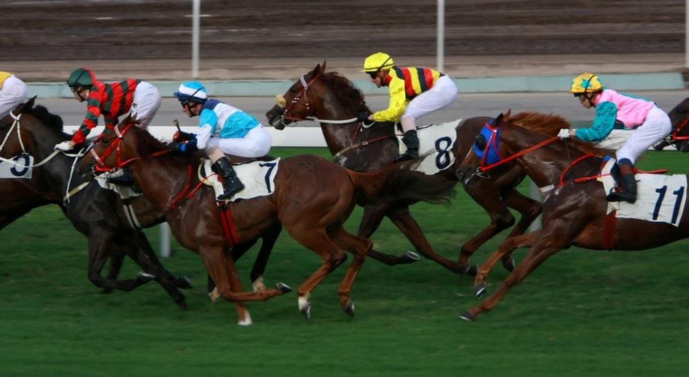 Courses de chevaux - Choses à Faire à Hong-Kong