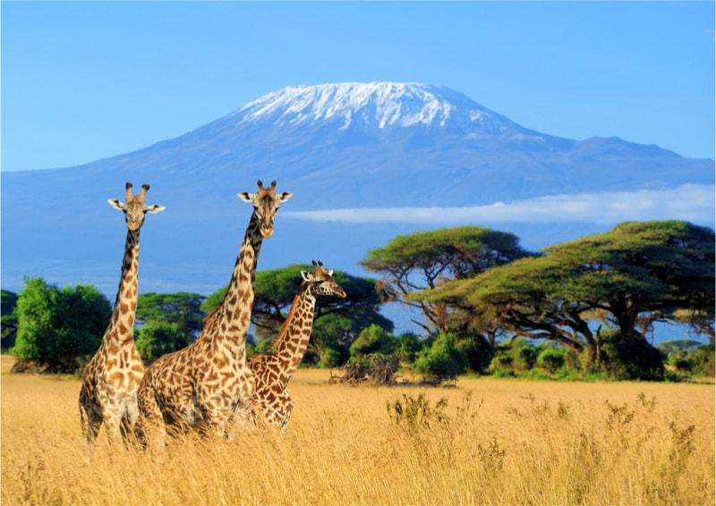 Kilimanjaro - 100 bucket list