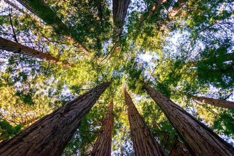Muir Wood National Monument - Choses à faire à San Francisco