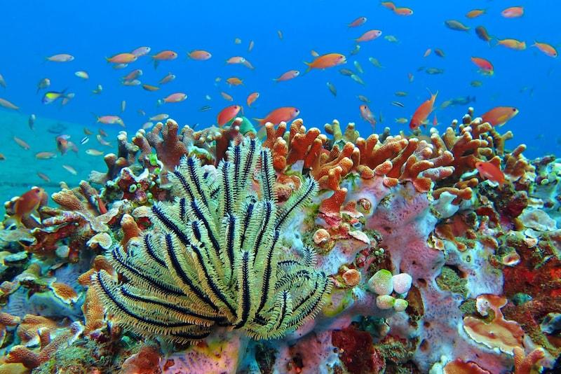Wakatobi - isole in Asia