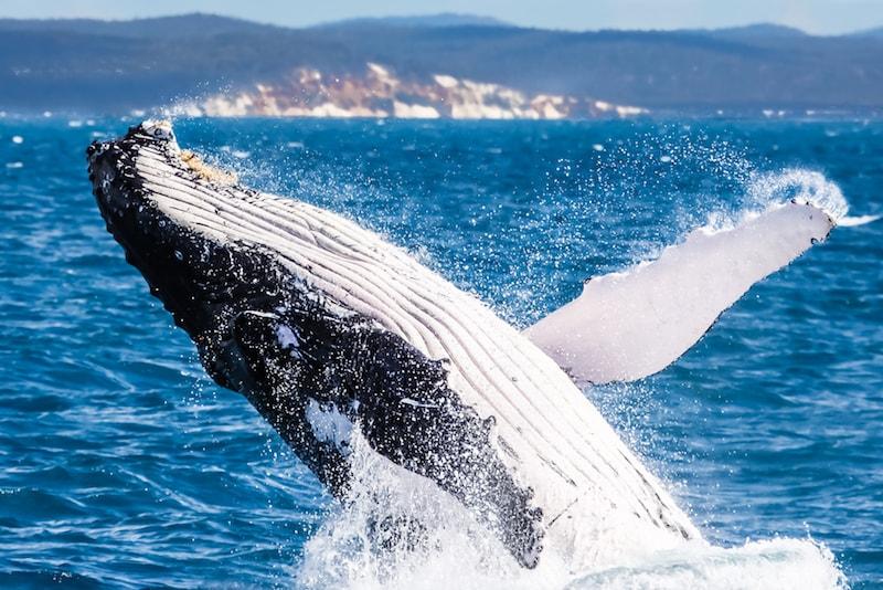observer les baleines au large - Que faire en Australie