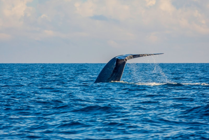 Mirissa Whale Watching - Places to Visit in Sri Lanka