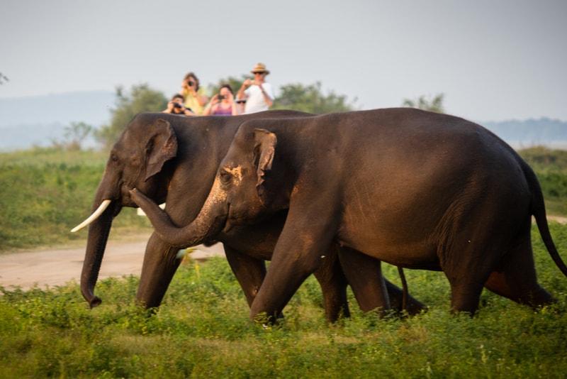 Yala National Park Elephants - Places to Visit in Sri Lanka