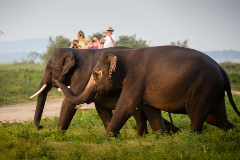 Yala National Park Elephants - Places to Visit in Sri Lanka