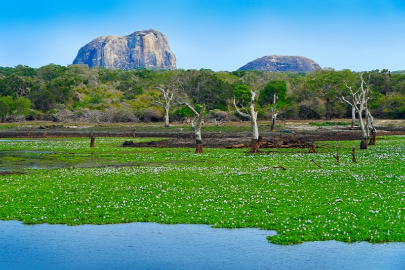 Yala National Park Landscape - Places to Visit in Sri Lanka