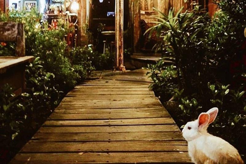 Dandelion - Fun things to do in Bali