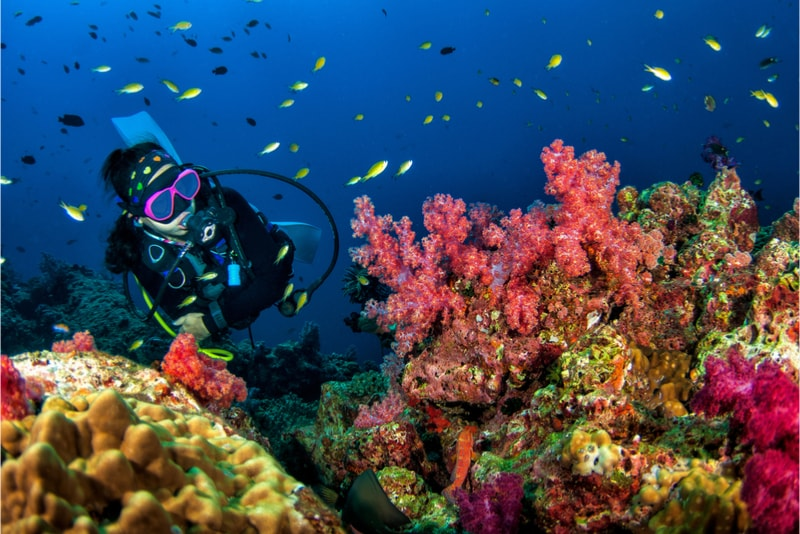 Diving - Fun things to do in New Zealand