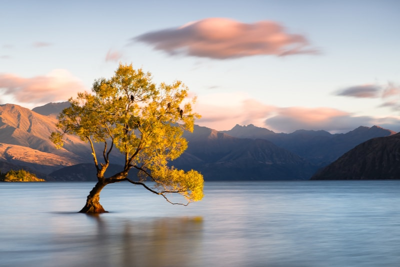 Lone Tree - Fun things to do in New Zealand