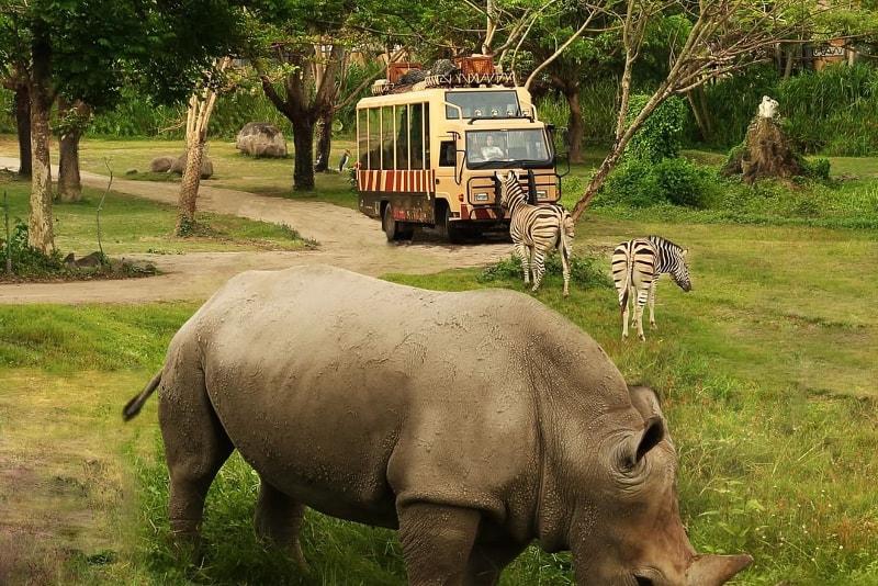 Marinha e Safari Park - coisas para fazer em bali