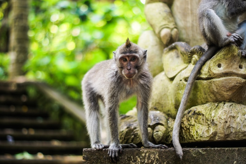 Ubud Sacred Monkey Forest - Fun things to do in Bali