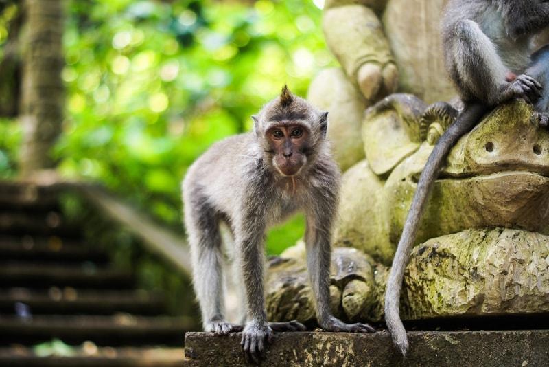 Forêt sacrée des singes d'Ubud - Activités amusantes à Bali