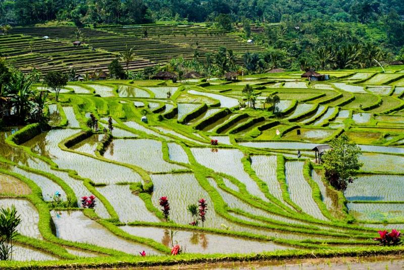 Terraço de campos de arroz Jatiluwih - Coisas para fazer em Bali