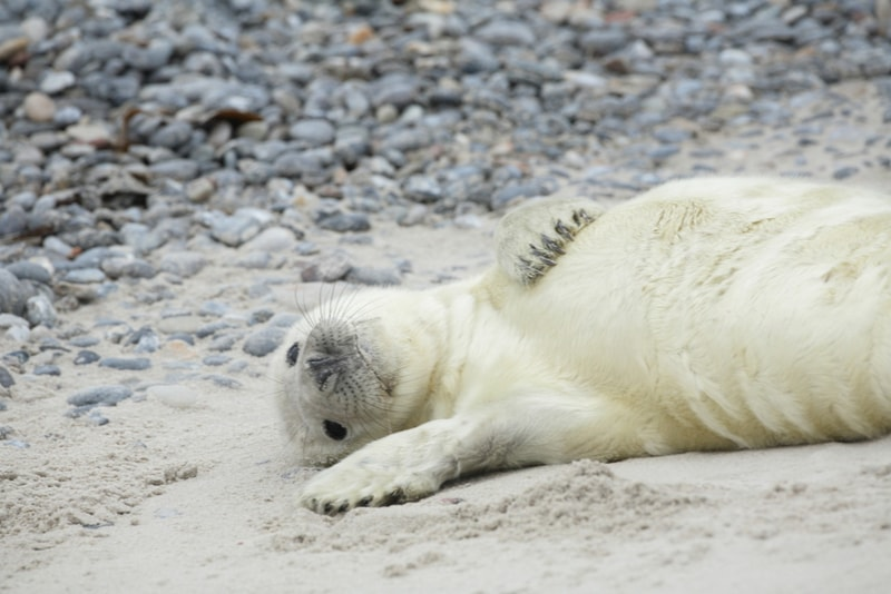 Seal pup playing on the beach - Fun things to do in New Zealand