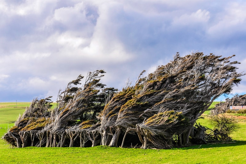 The Slope Point - Fun things to do in New Zealand