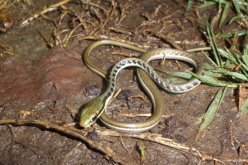 observação de cobras - coisas para fazer em bali