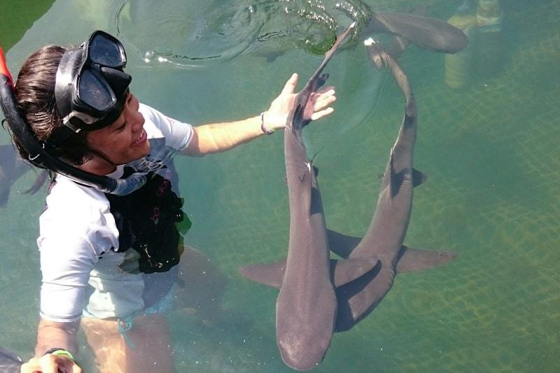 Nadar com tubarões - coisas para fazer em bali