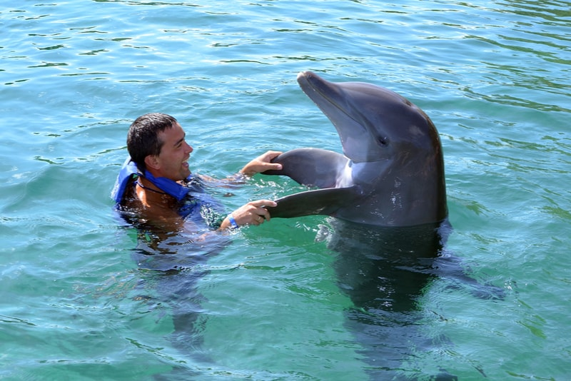 Swimming with dolphins - Fun things to do in New Zealand