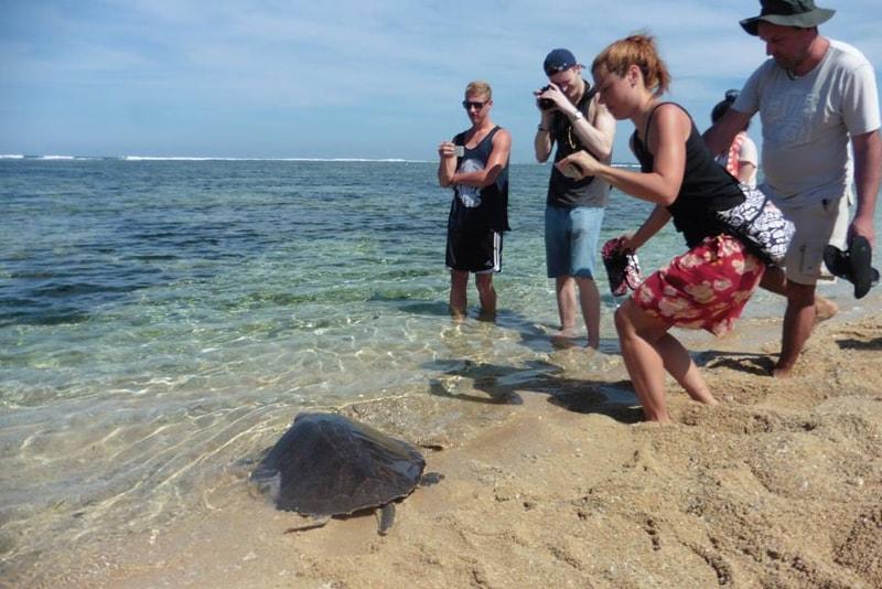 Santuário das tartarugas - coisas para fazer em bali