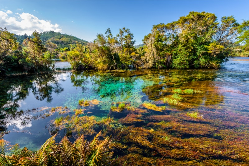 Te Waikoropupu Springs water - things to do in New Zealand