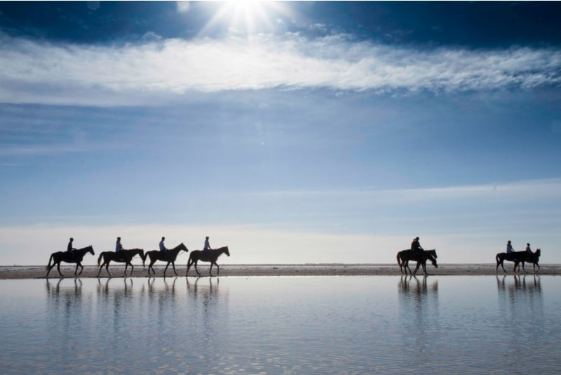 Horse Riding Beach - Things to Do in Cadiz