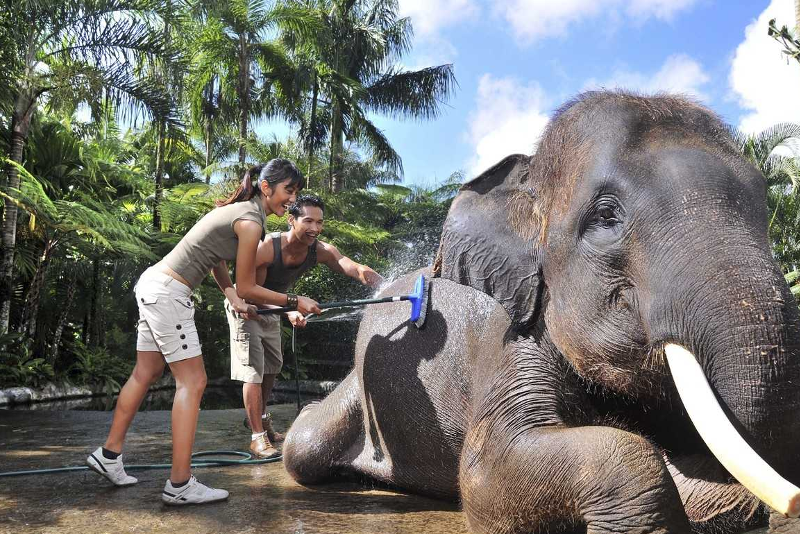 Bath & breakfast with elephants - Fun things to do in Bali