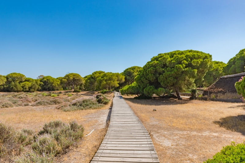 Donana - Things to do in Andalucia