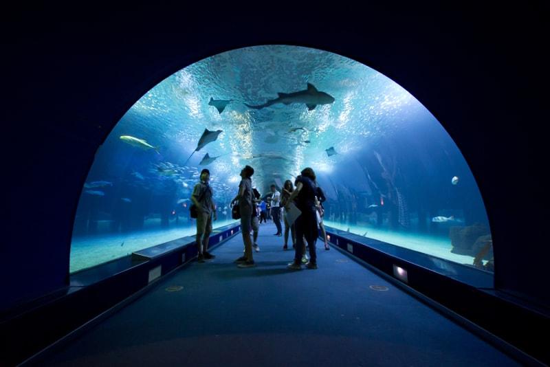 Oceanografic Valencia Aquarium
